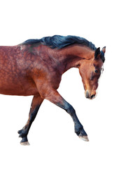 Wall Mural - Bay horse stepping forward. Side view.