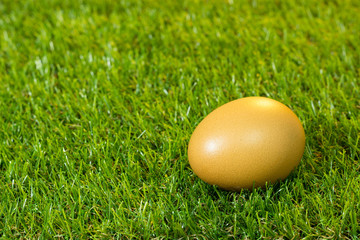 Eggs are placed on artificial grass.