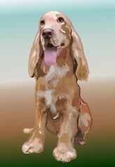 Hunting dog Spaniel beautiful vector illustration