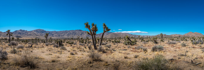 Panoramic view of the Joshua Tree National Park's landscape in the Mohave Desert of California