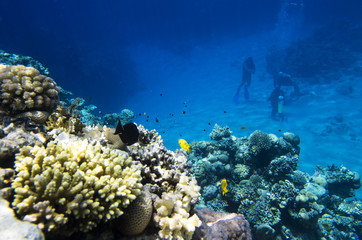A group of divers at the bottom near corals