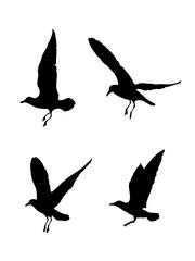 Möwen Vektorgrafik, Silhouette von vier fliegenden Vögeln