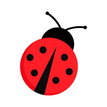Ladybug or ladybird vector graphic illustration, isolated. Cute simple flat design of black and red lady beetle.