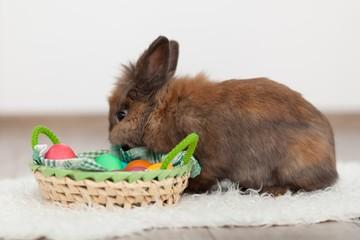 Fotoväggar - Rabbit and Easter eggs