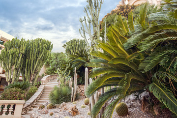 Cactus park in Monaco in the evening, Monte Carnot, Monaco