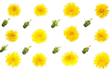 Background of dandelions isolated on white