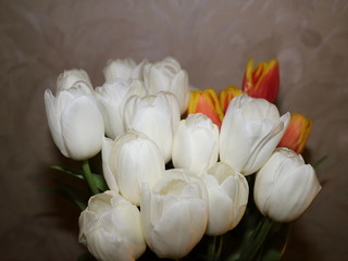 flowers white and red tulips