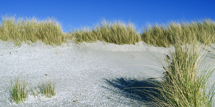 Laesoe / Denmark: Thousands of little white seashells cover the beach at the foot of the dunes in Vesteroe Havn