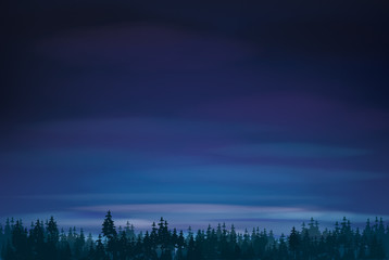 Vector   night   sky and  forest background.