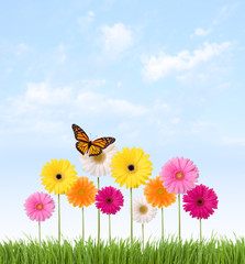 Gerber Daisies and Butterfly on a Blue Sky