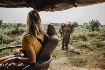 Fotoväggar - Sri Lankan Safari