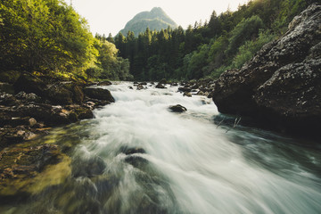 Foto auf Leinwand Fluss Mountain river in the green forest