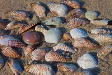 Shells in the sand on the seashore