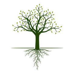 Green Tree with Leaves and Roots. Vector Illustration and graphic element.