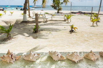 Paradise tropical in Belize Central America, seashell