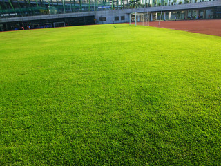 The lawn landscape of the football field