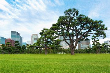 Pine trees outside the Emperor's Palace in Chiyoda, Tokyo, Japan