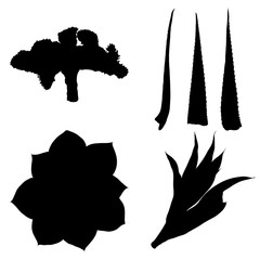 Black silhouettes of hand drawn cactus set. Desert exotic plants succulents collection. Vector.