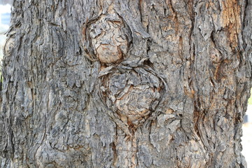 Close up pattern on trunk tree