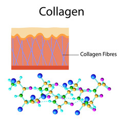Vector illustration with collagen formula isolated on the white
