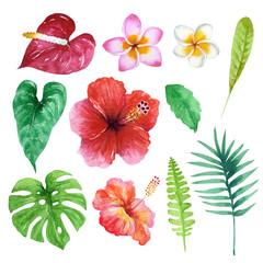 南国 ハワイ 植物