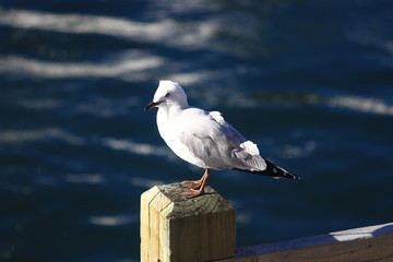 Seagull on the pole by the waves