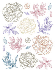 Set of Hand Drawn doodle peony flowers and herbs vintage floral elements. For anti stress coloring book on white background
