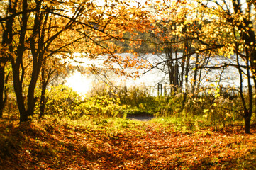 Blurred autumn landscape backlit with trees, fallen yellow leaves and the soft light. Photography soft lens