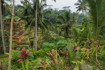 Palmiers et rizières à Bali