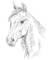 Horse portrait-3