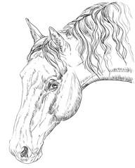 Horse portrait-4