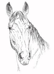 Horse portrait-5