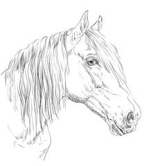 Horse portrait-6