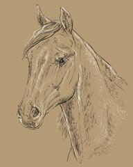 Horse portrait-3 on brown background