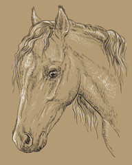 Horse portrait-8 on brown background