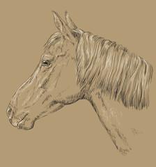 Horse portrait-9 on brown background