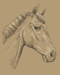 Horse portrait-10 on brown background