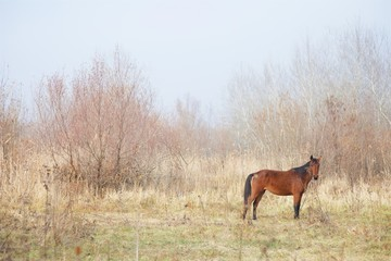A horse standing on a meadow in autumn, among the springing leaves of the trees