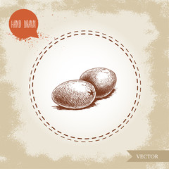 Hand drawn sketch style olives. Olive oil and healthy food vector illustration on vintage looking background.