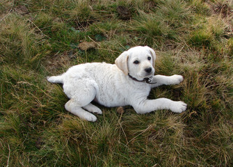 An photograph of a puppy seated on a grassland and captured when looking at the sky