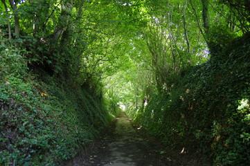 Our Lane