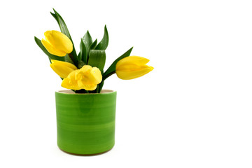 Yellow tulips in a green pot stock images. Yellow tulips on white background. Spring floral decoration. Spring background concept. Yellow tulips bouquet in a green vase