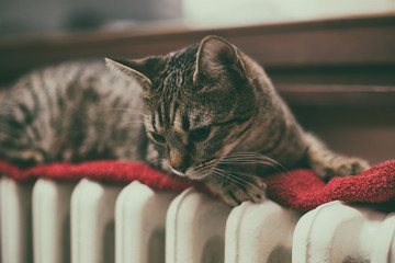 Cute cat lying down on radiator by the window.