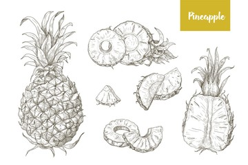 Set of naturalistic drawings of whole and cut pineapples and its slices isolated on white background. Bundle of exotic tropical fruit hand drawn with contour lines. Monochrome vector illustration.
