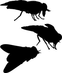 three fly silhouettes isolated on white
