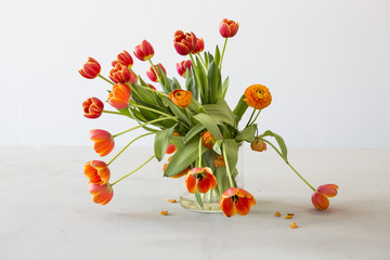 Withering tulips
