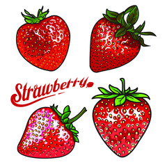 Vector strawberry set. Ripe red strawberry, realistic drawing vector illustration isolated on white background. Strawberry with green leaves on white background, botanical illustration