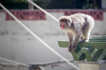 Macaco pequeno e magro a brincar num parque.