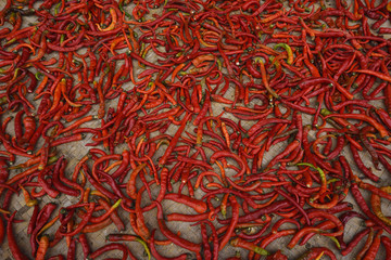 Chili laid out to dry