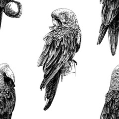 Seamless pattern of hand drawn sketch style Ara parrots. Vector illustration isolated on white background.
